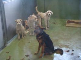 030収容犬