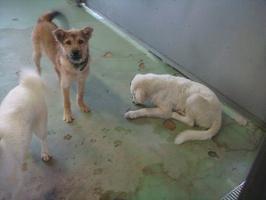 043白い犬