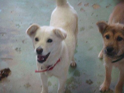 048白い犬2