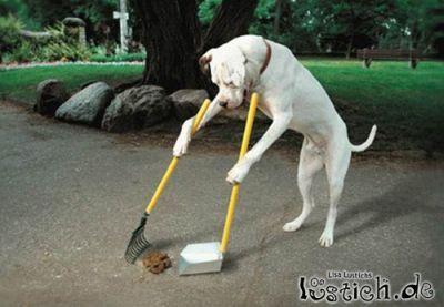 13188-fegender-hund.jpg