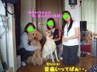 2008_0330nigawa0098kubi.jpg