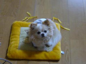 dog5 007_convert_20080318141148