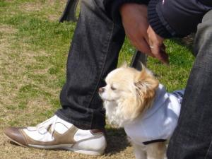 dog5 004_convert_20080318140925