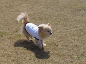 dog5 001_convert_20080318115945