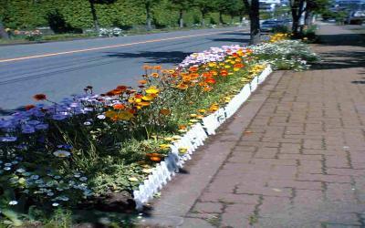 道路際の花壇