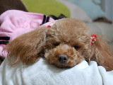 2008 パパbirthday 114