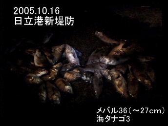 20051016.jpg