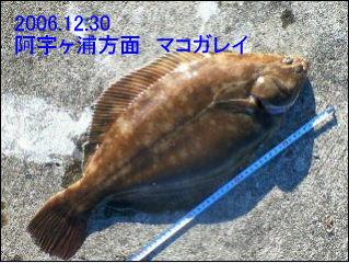 20061230.jpg