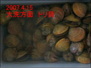 2007415.jpg