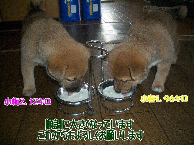 _1129_a1139887811kikoka_6.jpg