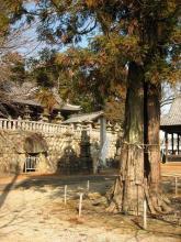 二ノ宮神社とスギ