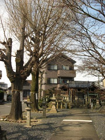 夫婦銀杏と天満神社