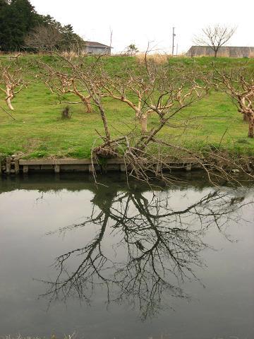富有柿畑と犀川