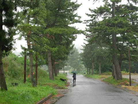 旧中山道松並木