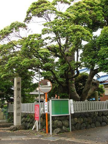 関ヶ原宿本陣跡のスダジイ