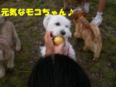 りんごタンクちゃん 015