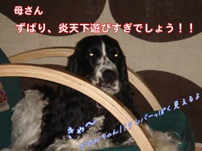 DSC013980000.jpg