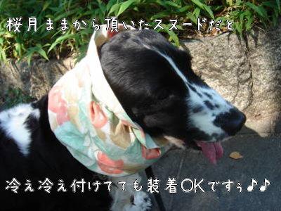 DSC014220000.jpg