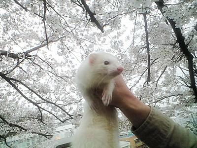 はると桜の2ショット☆
