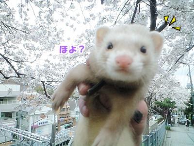 ななと桜の2ショット☆