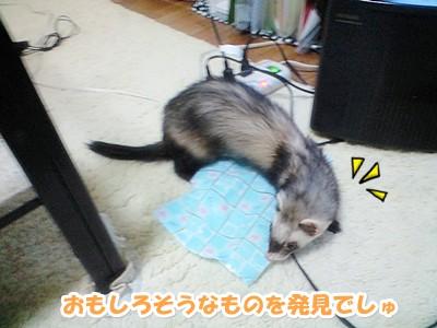 あゆむさんの探検☆