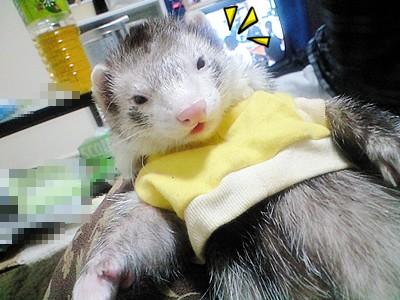 黄色いお洋服のかいと Part1☆
