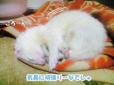 お休みタイム中のゆうちゃん☆