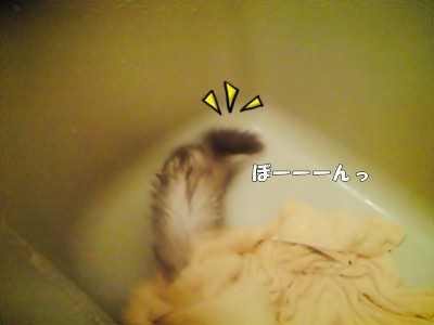 ななのお風呂デビュー☆