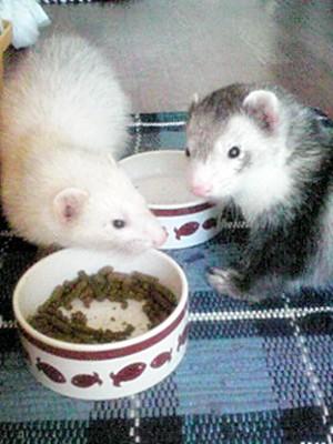 仲良く朝ご飯☆