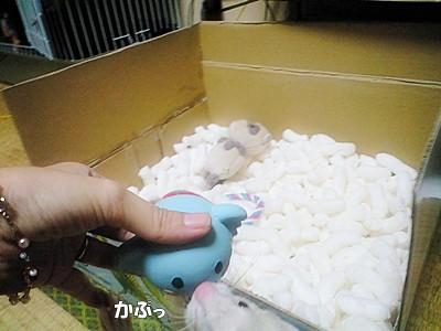 はるのおもちゃ運び②