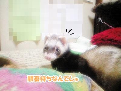 順番待ち☆
