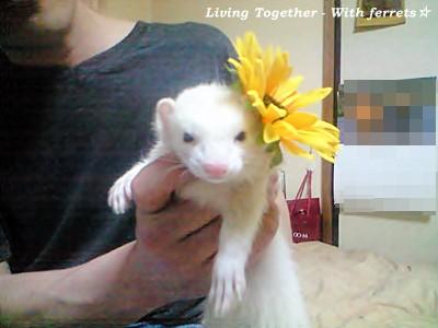 向日葵の髪飾り&はる(位置を変えて…)☆