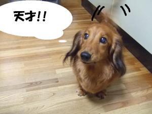 2007~2008 実家 224 ぺ