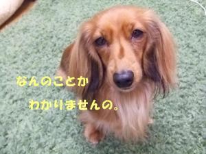 thiara 2008 1 23 060  ぺ