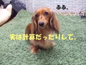 thiara 2008 1 23 094 ぺ