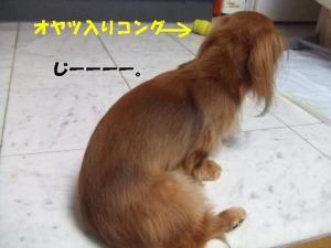 thiara 2008 1 30 064