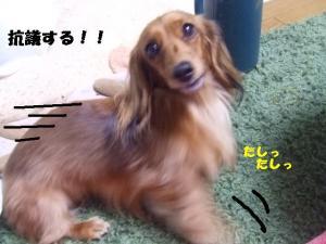 thiara 2008 0204 036 ぺ