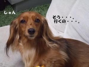 てぃあら2008 2 15 094