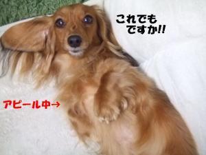てぃあら2008 2 15 102  ppp