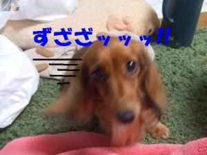 てぃあら2008 2 15 031