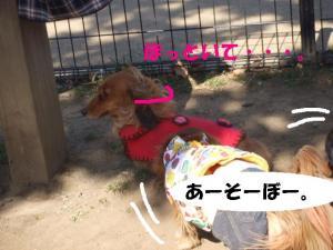 昭和記念公園 025 ぺ