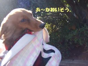 昭和記念公園 062 ぺ