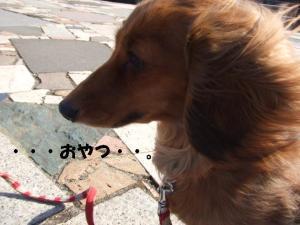 昭和記念公園 123 g