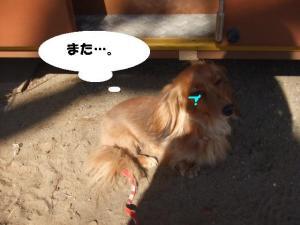 昭和記念公園 089 ぺ