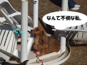 昭和記念公園 104 pe