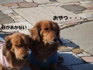 昭和記念公園 114 pr