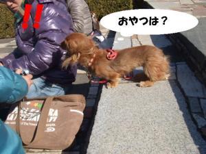 昭和記念公園 115 ぺ