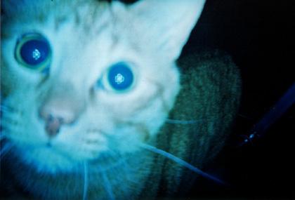 青いマロン