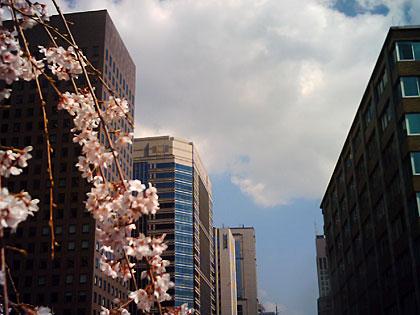 大手町と桜
