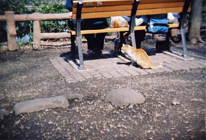 井の頭公園の強い猫